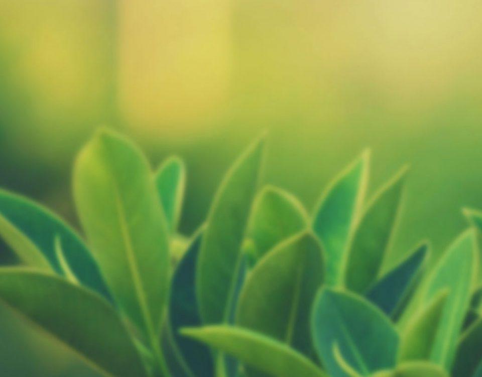 romatoid-artrite-karşı-hangi-bitkiler-faydalı-gelir