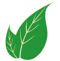 romatoid-artrite-hangi-bitkiler-faydalı-gelir
